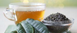 Estudo realizado por investigadores chineses sugere que o consumo diário de chá protege e melhora as funções cognitivas e a memória.